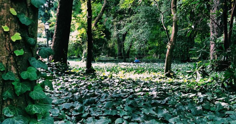 Jardín Botánico: un pulmón verde en Palermo.